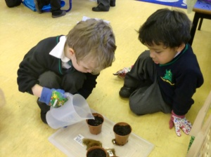 We made sure that the soil was damp.