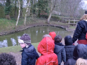 We saw the ducks swimming in the pond.