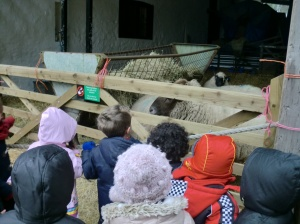 We saw the sheep in the shed.